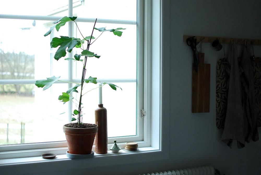 Att unna sig gröna växter