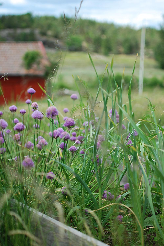 Planera odlingar och glädjas åt naturens skafferi